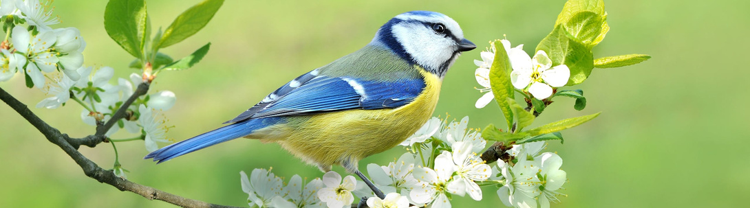 Wildvögel