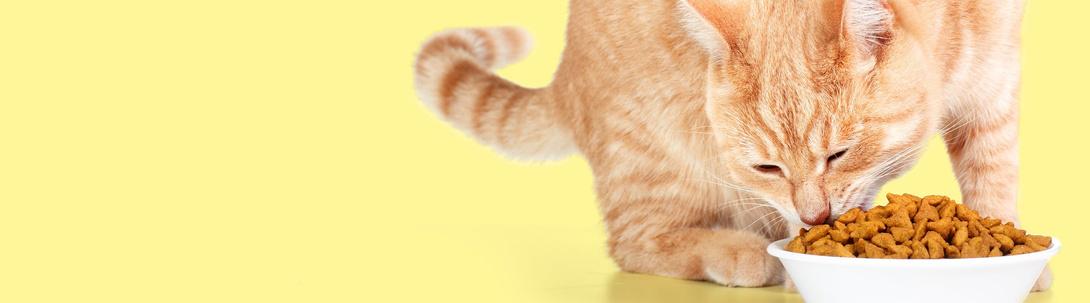 Katzenernährung