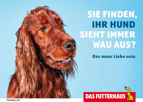 Sie finden, Ihr Hund sieht immer WAU aus?