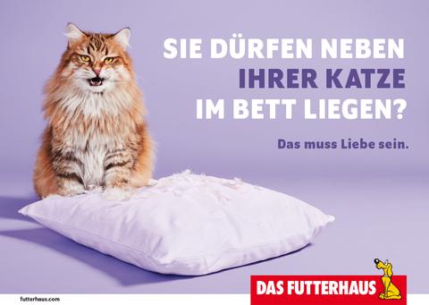 Sie dürfen neben Ihrer Katze im Bett liegen?