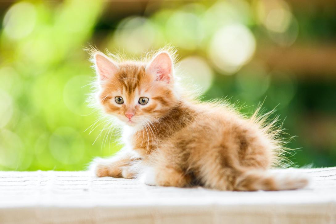 Entwicklungsschritte von Kitten