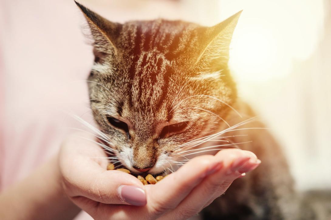Premiumfutter für Katzen