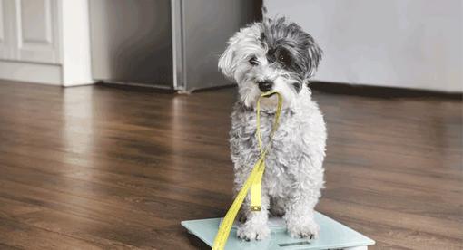 Gewichtskontrolle für Hunde