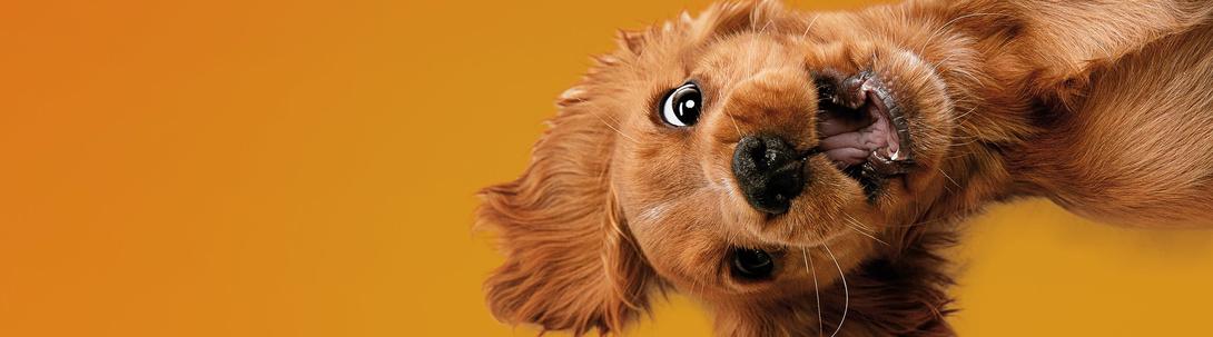 Wissenswertes zur Hundehaltung