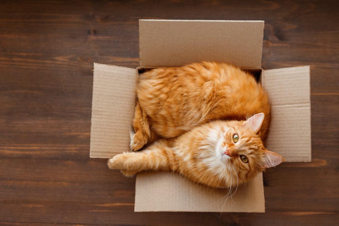 [Translate to Österreich:] Erstausstattung für Katzen