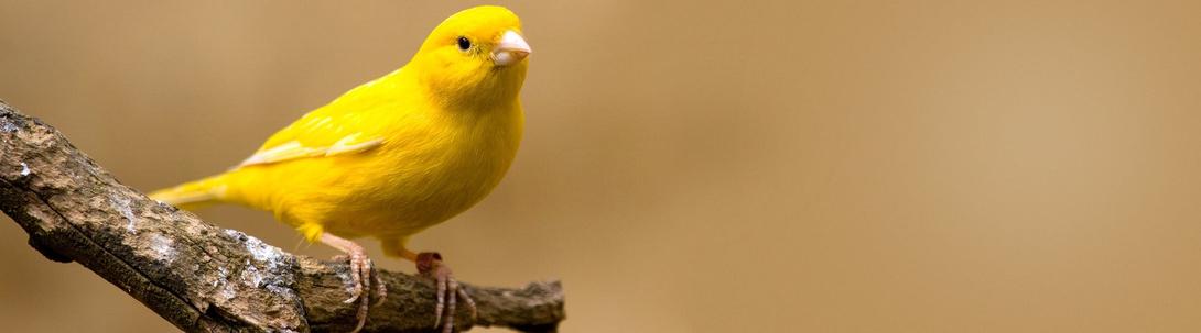 Tierische Tipps für Vögel