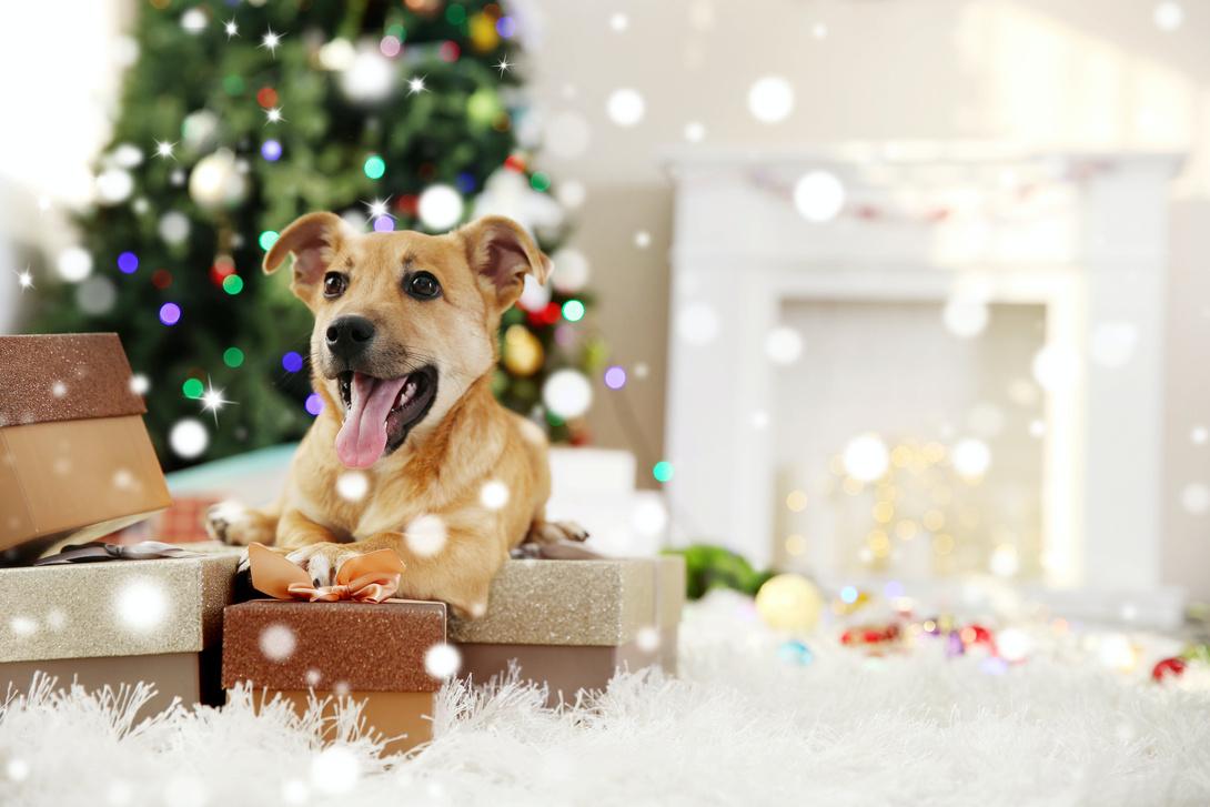 Hund Weihnachtsbaum