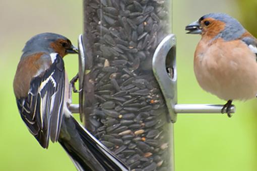 Gartenvögel füttern Ratgeber