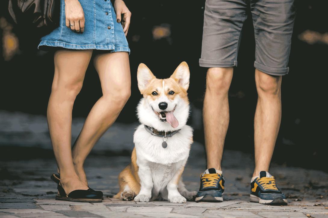 Hund zwischen Menschen