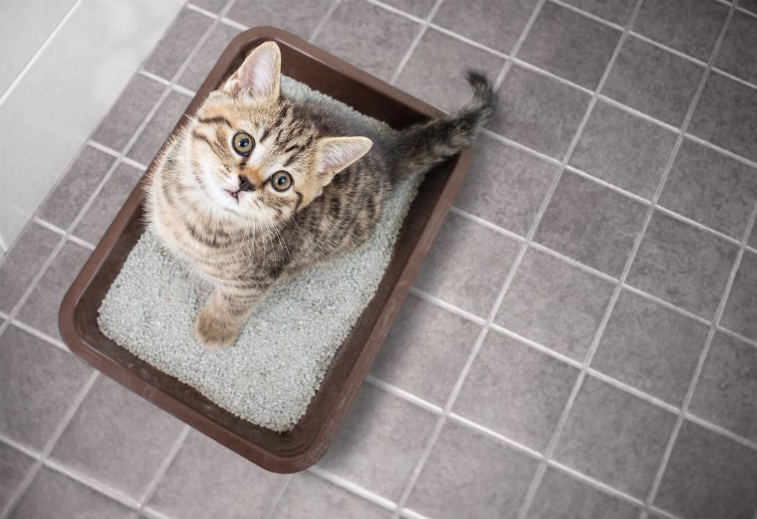 Katzentoilette sollte gut ausgewählt werden