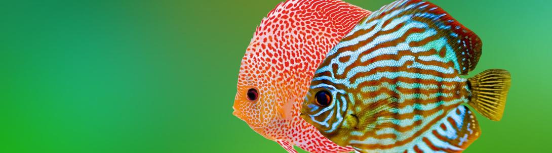 Süßwasseraquaristik