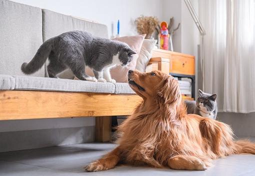 Hund und Katze in einer Wohnung