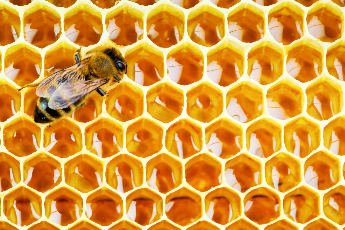 Futterhaus Engagement Bienenschutz