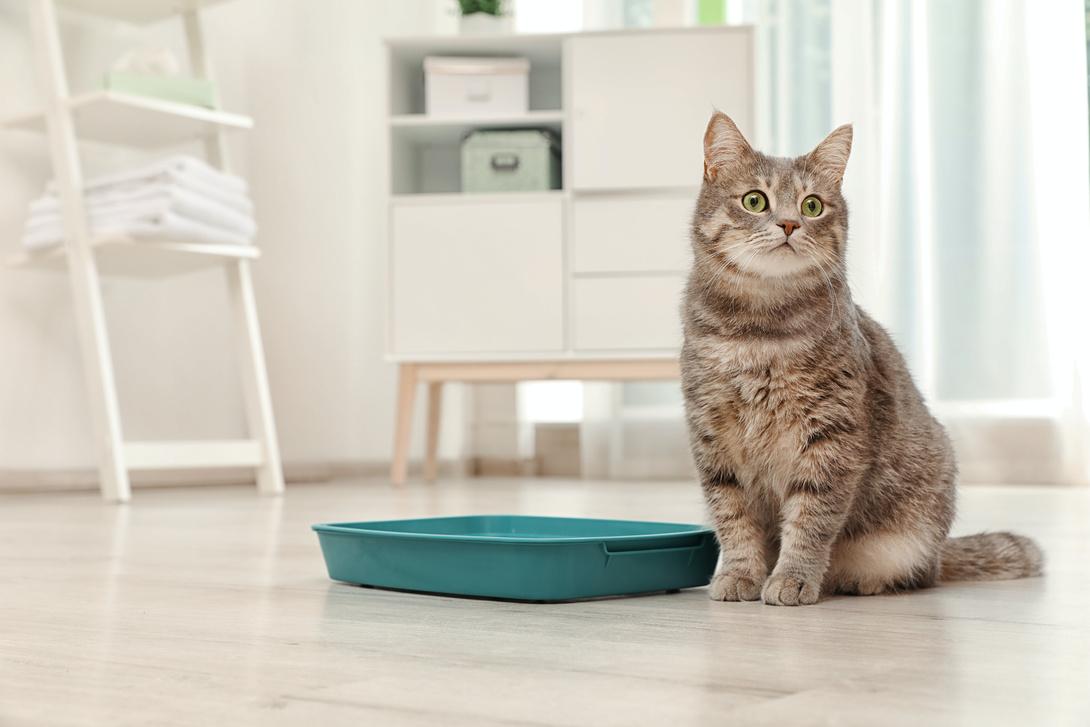 [Translate to Österreich:] Katzentoilette für Drinnen-Katzen