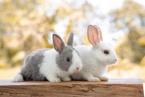 Körpersprache bei Kaninchen