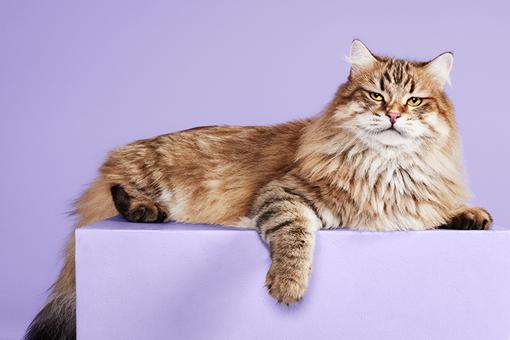 DASFUTTERHAUS Tipps bei Katzenerkältung