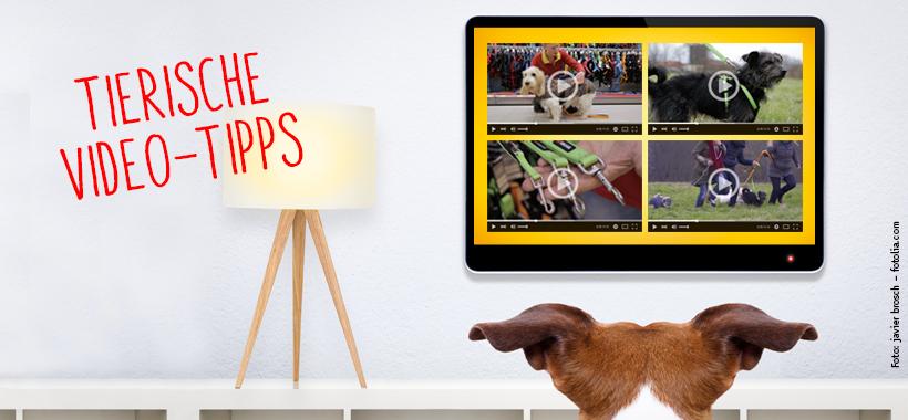 Tierische Video-Tipps