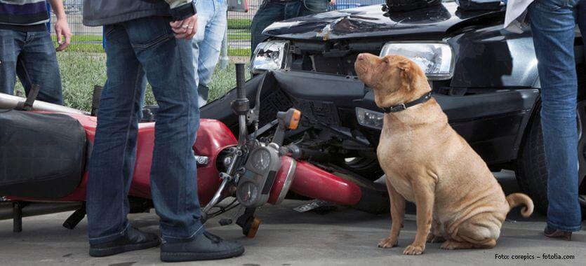 Hunde-Haftplichtversicherung