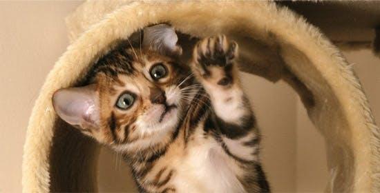 Die Katzensprache - Verstehen Sie kätzisch?