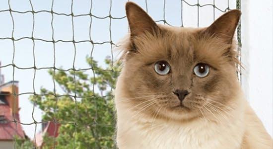Katzennetz zum Schutz auf dem Balkon