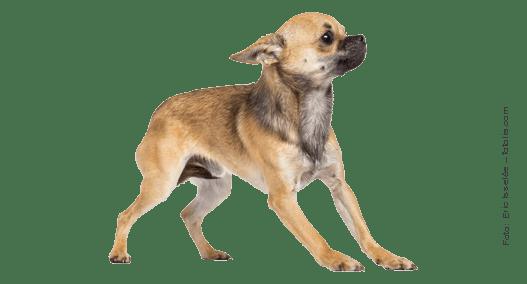Ängstlicher Hund