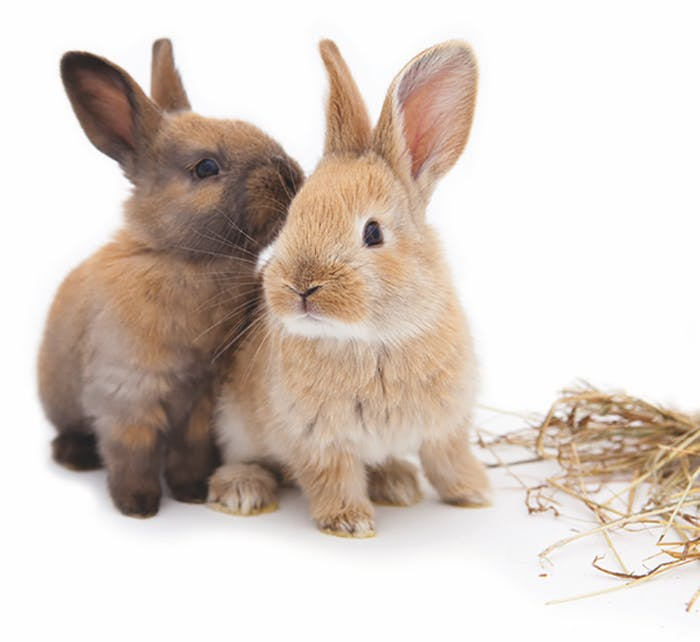Klickertraining für Kaninchen