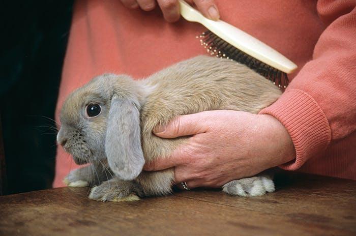 Fellpflege für Kaninchen