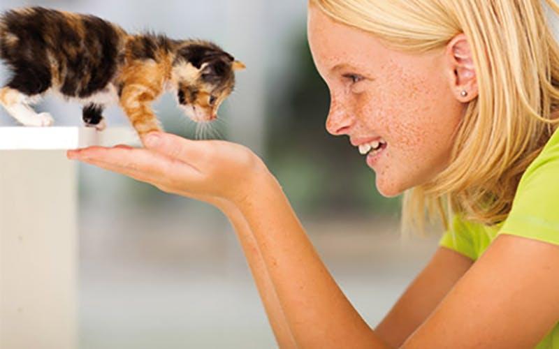 Wissenswertes zur Anschaffung einer Katze