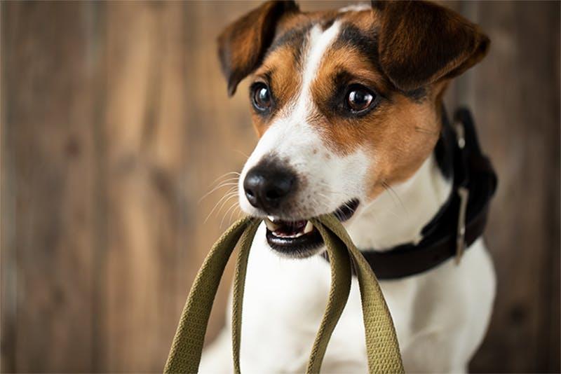 Leinentraining mit dem Hund