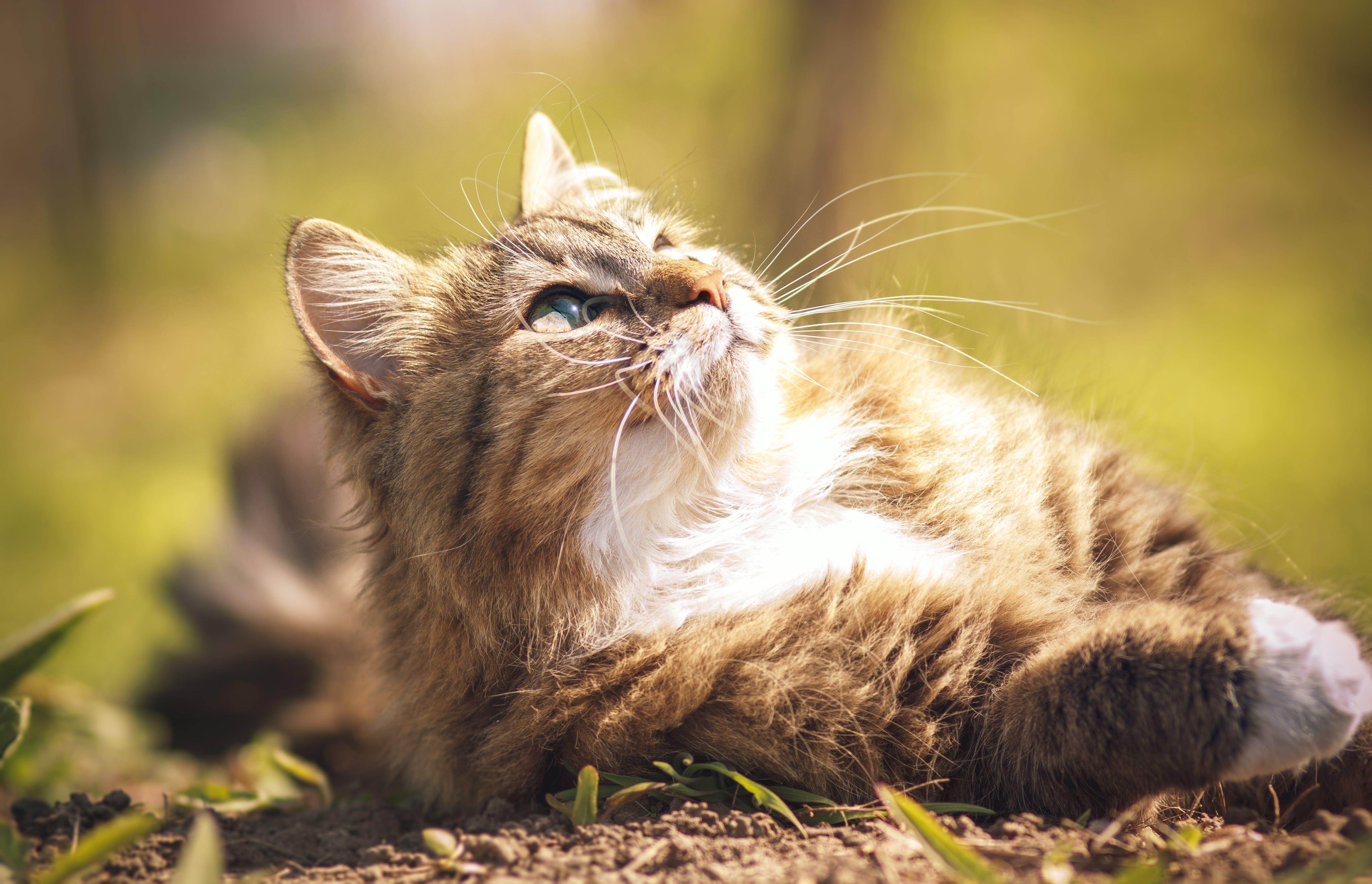 Gewichtszunahme bei Katzen nach Kastration