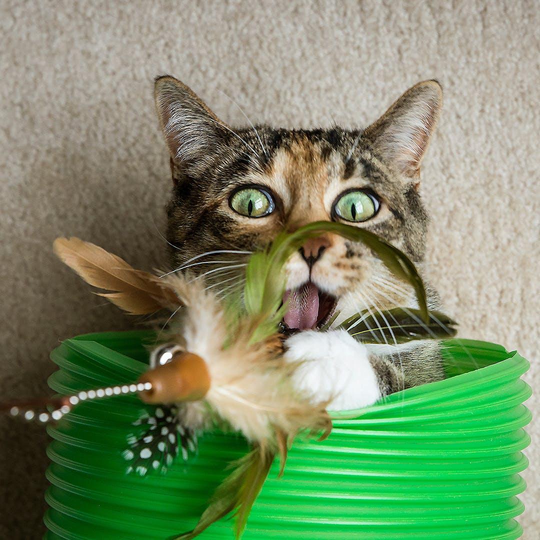 Mit Katzen spielen ohne Kratzen