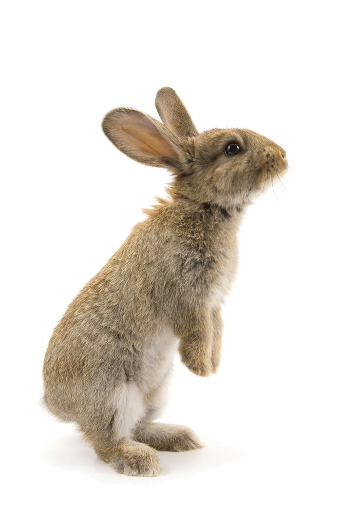 [Translate to Österreich:] Kaninchen Erstausstattung