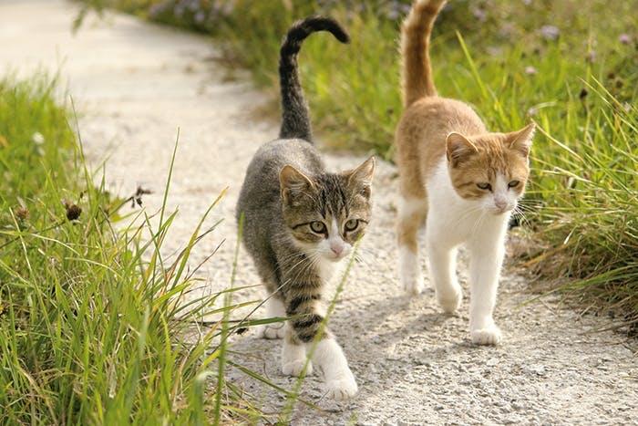 Die verschiedenen Katzentypen