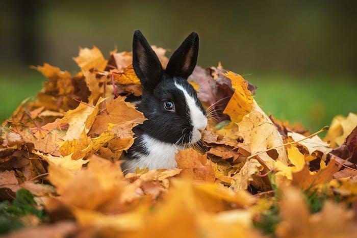 Winterfestes Kaninchengehege
