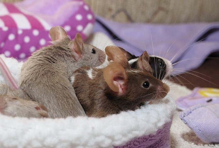 Zubehör für Mäuse