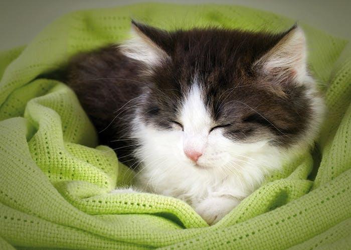 Katzenschnurren - Was die Katze uns sagen möchte
