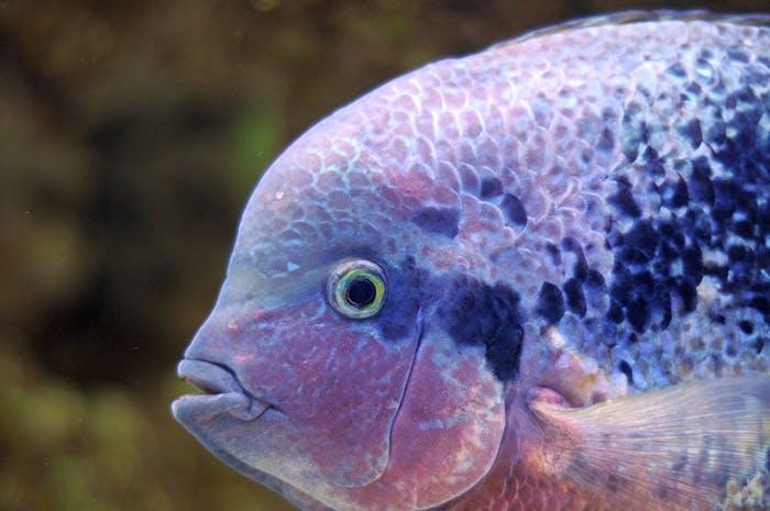 Die Sinne der Fische