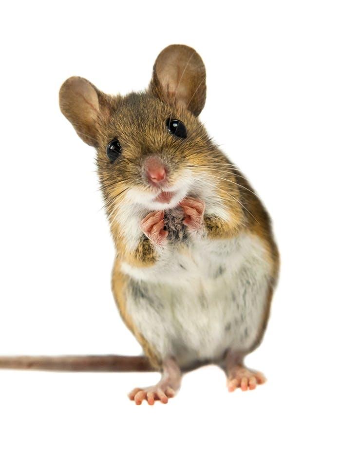 [Translate to Österreich:] Erstausstattung für Mäuse