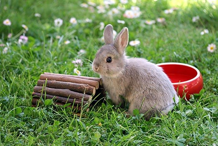 Kaninchen-Spielzeug