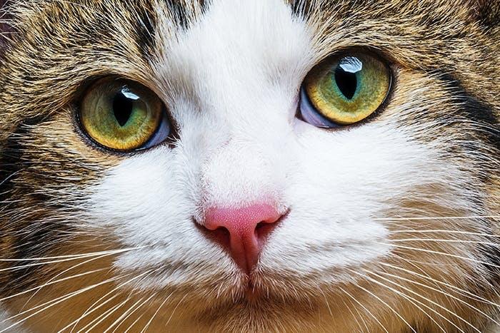 Gesundheitscheck für Katzen