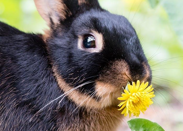 Naturbelassene Sommerernährung für Kaninchen