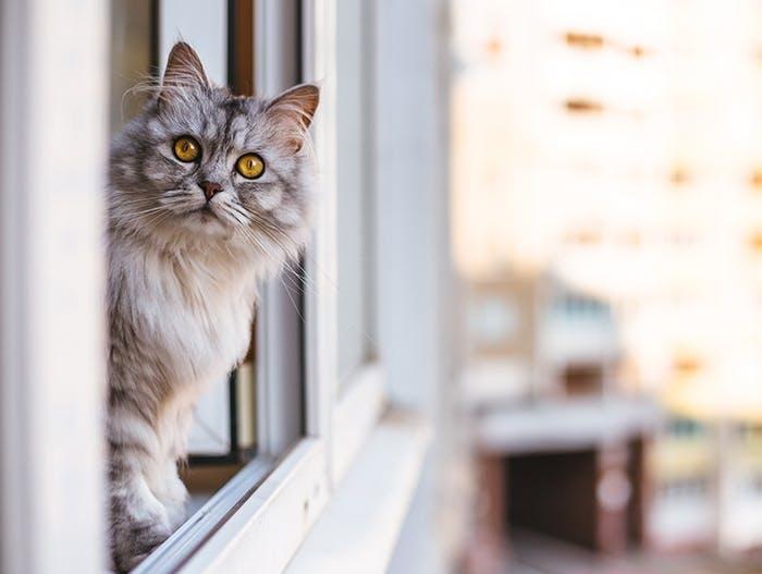 Die katzensichere Wohnung