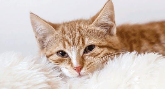 Katzenerkältung vorbeugen