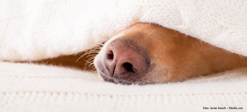 Schlaf- & Ruhephasen von Hunden