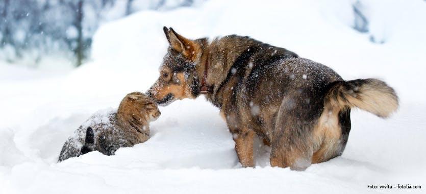 Hund & Katze im Schnee