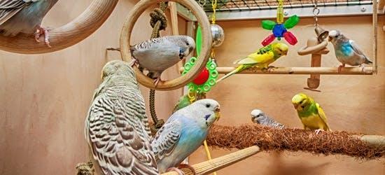 [Translate to Österreich:] Sitzstangen mit Ziervögeln