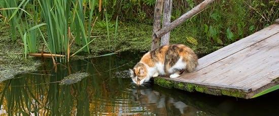 Frisches Wasser für Katzen