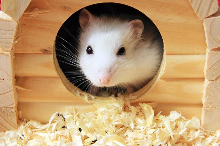 Umzug in einen neuen Käfig - Einzugshilfe für Hamster