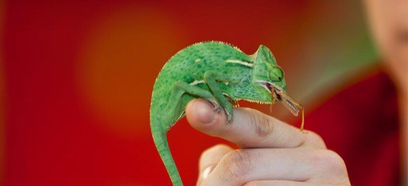 Die Ernährung von Reptilien