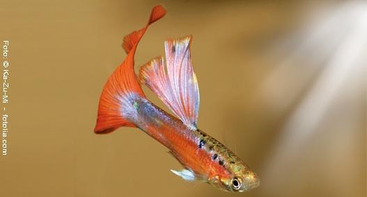 Neue Fische im Aquarium